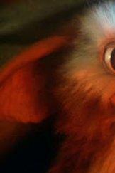 <i>Gremlins</i>.