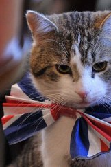 Larry, the 10 Downing Street cat, was never affected by the compulsory cat registration