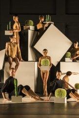 Sydney Dance Theatre presents Alexander Ekman's Cacti.