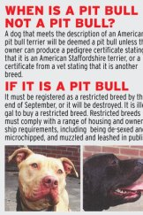 When is a pit bull not a pit bull?