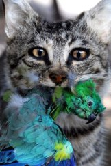 A feral cat caught in the act.