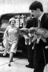 My corgis and I ... royal puppies are delivered to Heathrow Airport to accompany the Queen to Balmoral.
