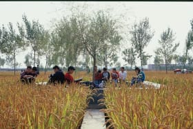 University students sit surrounded by rice plants in  the Chinese city of Shenyang.