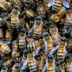 California cleaning lady attacked by 80,000 bees