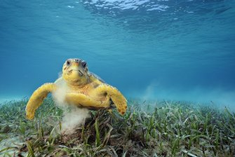 The department said endangered loggerhead turtles may be affected by the proposal.