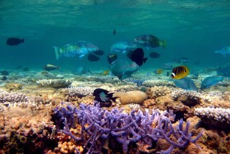Critics say the revised Reef 2050 Plan ignores Australia's weak emissions reduction targets.