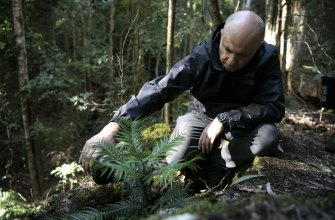 Matt Kean, Minister for Energy and Environment, and waters a Wollemi pine in one of the two wild translocation sites.