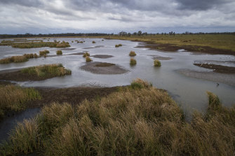 The important Macquarie Marshes wetlands in north-western NSW have begun filling after the worst drought on record broke last year.