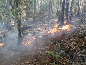 A fire burning in normally damp rainforest near the World-Heritage listed Mt Hyland nature reserve.