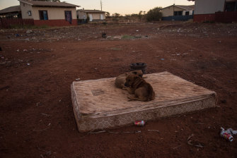 Stray bush dogs sit on a dusty mattress in Parnpajinya. Despite a big sign banning the consumption of alcohol in the community, cans and shattered bottles line the streets of Parnpajinya.