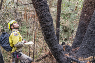 Berin Mackenzie visiting one of the wild sites affected by the 2019-20 bushfires.