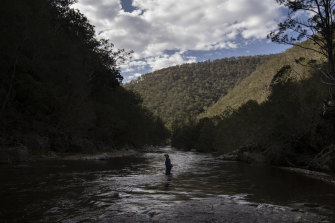 Harry Burkitt from the Colong Foundation for Wilderness, wades across part of the lower Kowmung River.