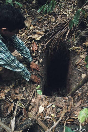 In 2005 Survival Internationalpublished this photo of the hole the man dug.