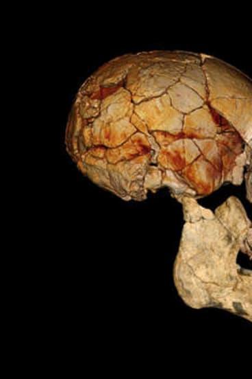 The TKNM-ER 1470 cranium found in 1972.