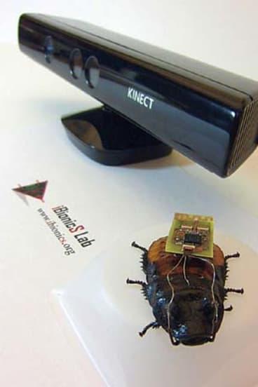 A biobot cockroach.