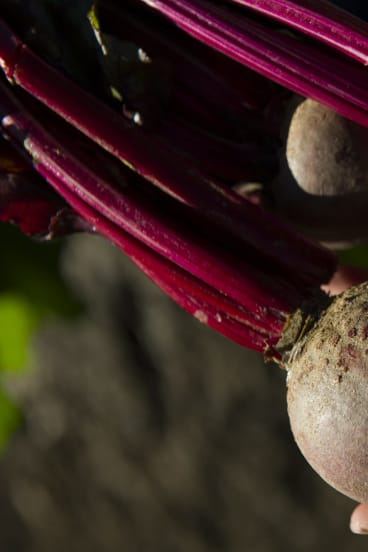 Beetroot at the Kingston Old Bus Depot Markets.