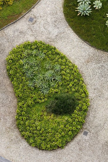 The landscapes of Roberto Burle Marx blew Warwick Forge's mind: ''I thought, I have no idea what I am looking at here.''