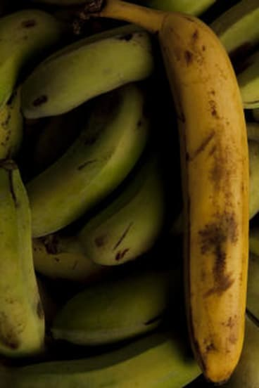 True ... bananas can ripen other fruit.