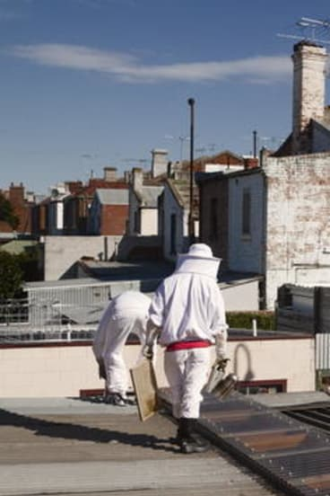 Melbourne City Rooftop Honey above Fatto a Mano in Gertrude Street.