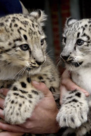 Did you hear? Apple is releasing Snow Leopard this week.