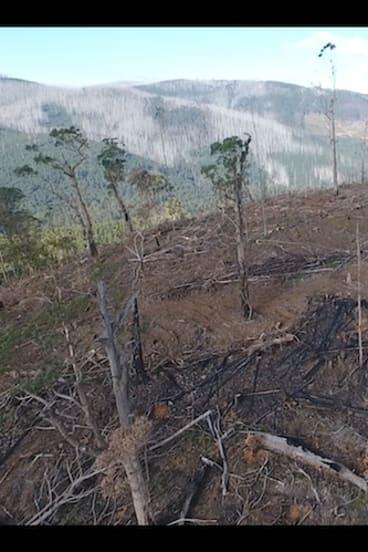 Logging in the central highlands.