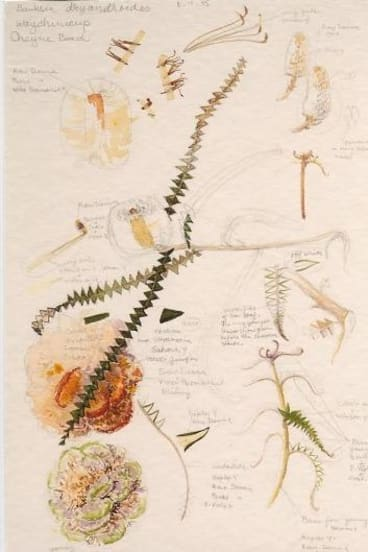Celia Rosser's field sketches
