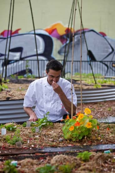 Pick of the bunch ... Jared Ingersoll at the James Street community garden in Redfern.