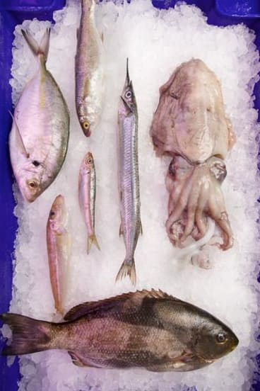 Black bream (bottom), yellow-eye mullet (top), silver trevally (far left), garfish (pointy nose), sardine (smallest), silver whiting (second from left) and cuttlefish.