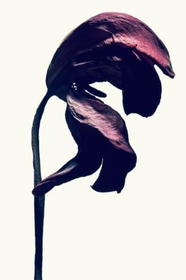A tulip from Isamu Sawa's exhibition called Without Water.