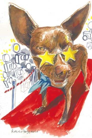 Star quality ... Koko by Rocco Fazzari.