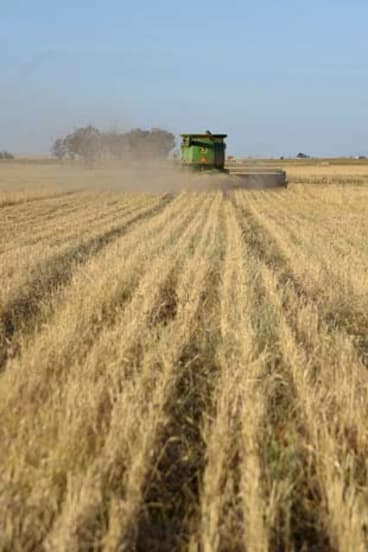 Cropping up … as yields increase, the proportion of agricultural land with overseas owners is on the rise, standing at 11 per cent.