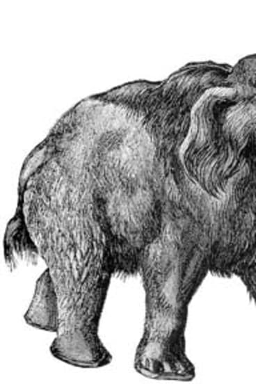Woolly Mammoth.