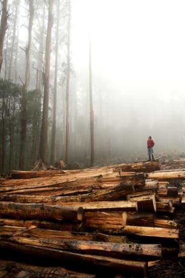 Native forest logging.