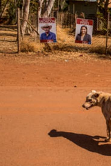 A dog strolls past election signs in Lajamanu.