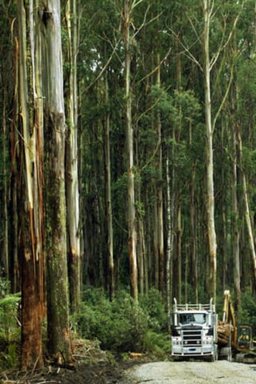 'Valuable as it may be, storing carbon in forests doesn't change our use of fossil fuels.'