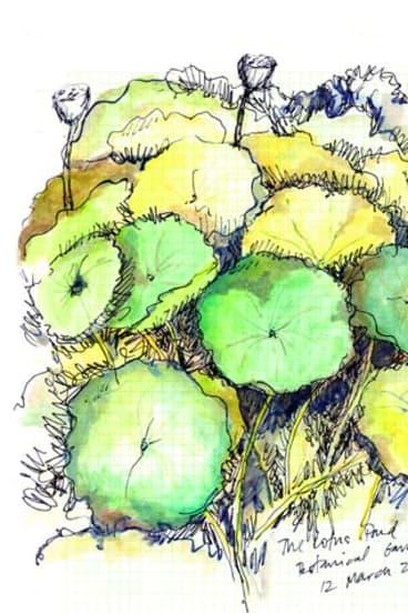 Pereira's lotus pond sketch.