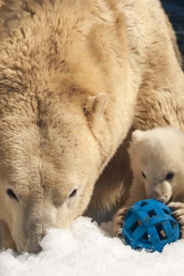 Liya and her baby polar bear at Sea World.