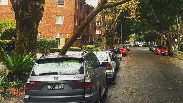Wet weather and strong winds in Sydney. A fallen branch on a BMW in Rose Bay.