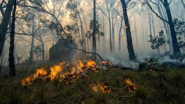 The Lancefield fire in Cobaw Forest.