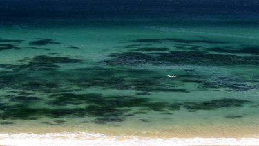 A lone swimmer cools off at Bar Beach in Newcastle on a hot October day last year.