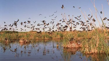 At risk: Protected wetlands from the Macquarie River to Orange lie in the way of a proposed pipeline.
