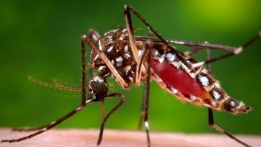 Zika virus is normally transmitted by mosquitoes.
