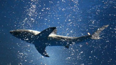 A great white shark up to 4.5 metres is reportedly responsible for the deadly attack.