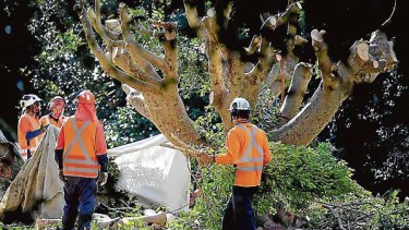 The big chop... workers remove trees at Wahroonga station.