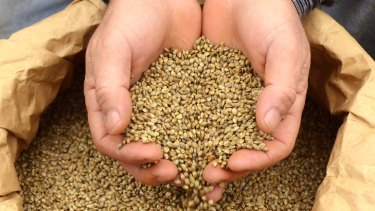 Nutritional stars ... dietitians seeking to overturn ban on hemp seeds.
