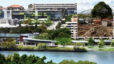 An artist's impression of the South Bank redevelopment. INSET: Earth works edge around the to-be-relocated fig tree.
