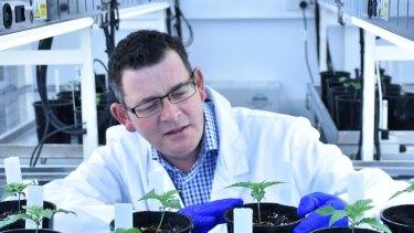 Premier Daniel Andrews says changes to medicinal cannabis legislation are long overdue.