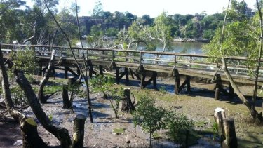 Brisbane City Council has removed the boardwalk at the city botanic gardens.