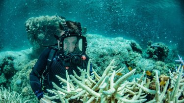 Richard Fitzpatrick inspects recent bleaching of coral in the Great Barrier Reef at Vlasoff Reef near Cairns.