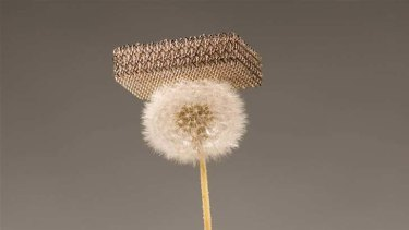 Modern marvel … the new material on a dandelion.